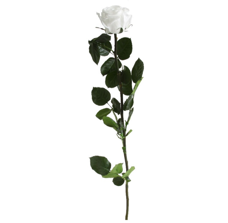 Rose with stem Standard