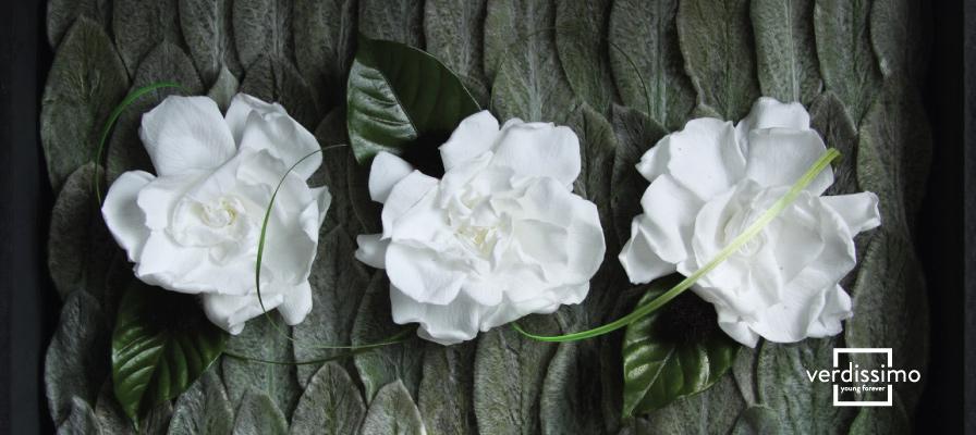 Aumenta la demanda de flores preservadas - Verdissimo