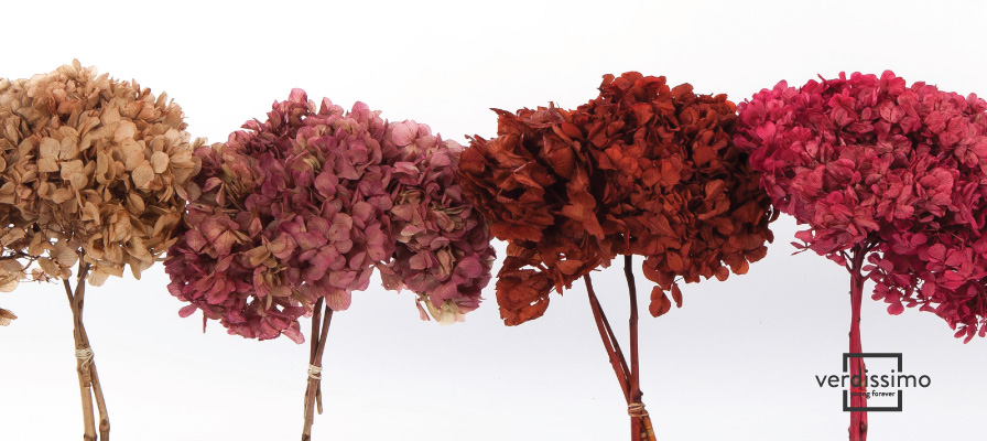 Verdissimo: Wholesaler of preserved flowers - Verdissimo