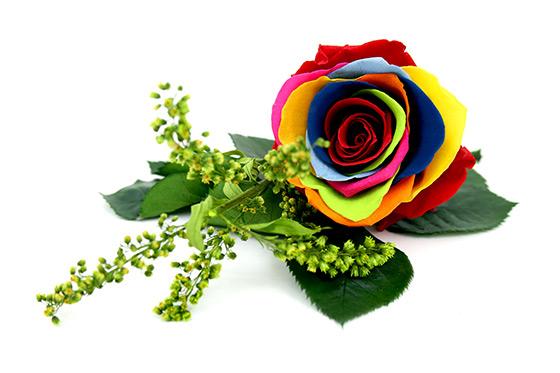 Fabricante de Flor preservada