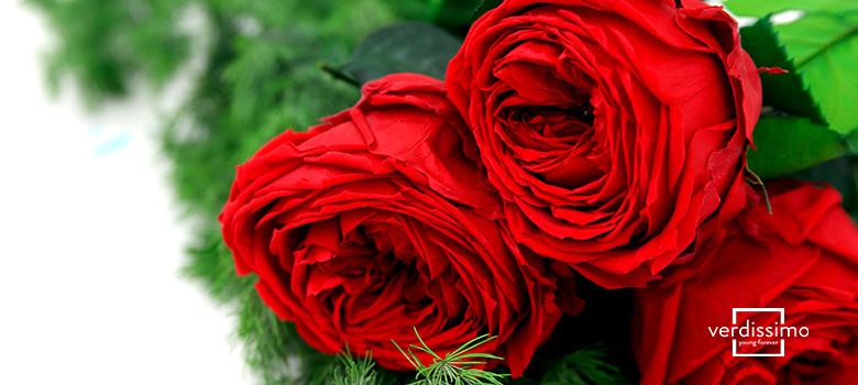 Verdissimo, der führende Blumengroßhändler in der Herstellung konservierter Blumen - Verdissimo