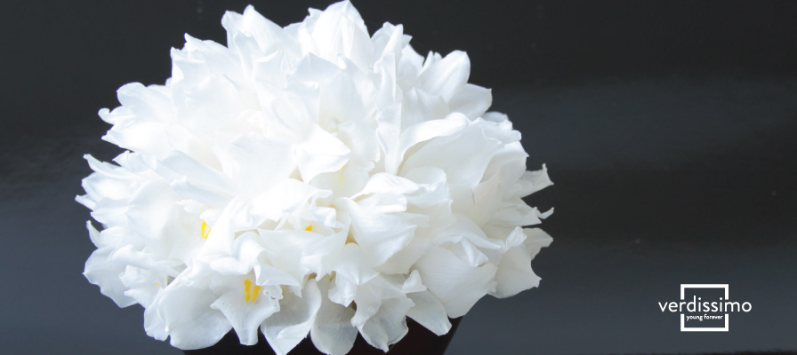 How do preserved flowers maintain their beauty? - Verdissimo