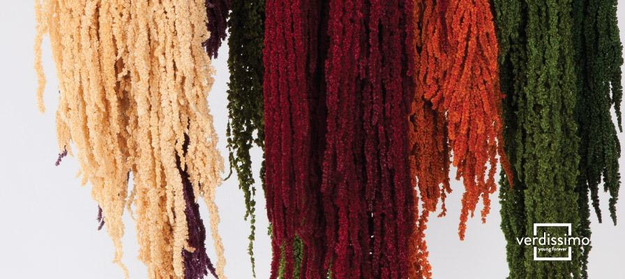 Amaranto preservado - La flor de la inmortalidad