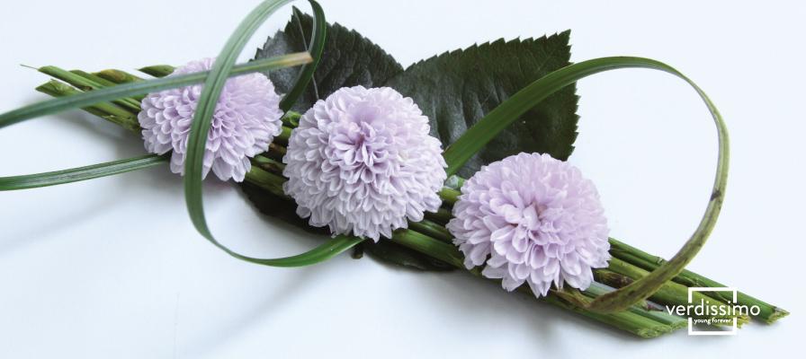 Crisantemo focus preservado para tus composiciones florales en Verdissimo