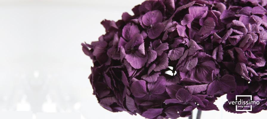 La flor del mes: Hortensia, perfectas para dar un toque romántico y clásico. - Verdissimo