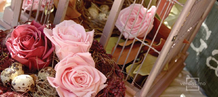 La planta del mes: La rosa - Verdissimo