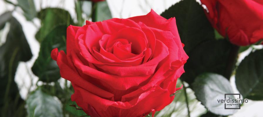 Die Sprache der Blumen - Verdissimo