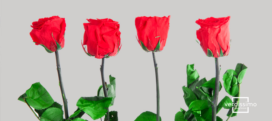 Les légendes sur les roses rouges - Verdissimo