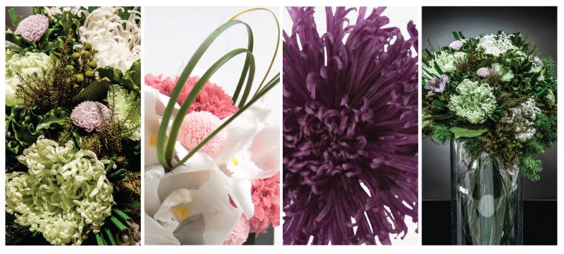 Chrysanthemum flor de noviembre - Verdissimo
