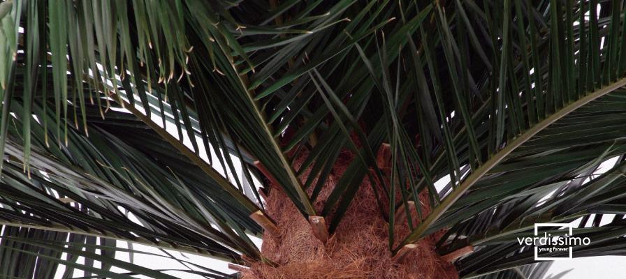 Decoración con palmeras en interior - Verdissimo