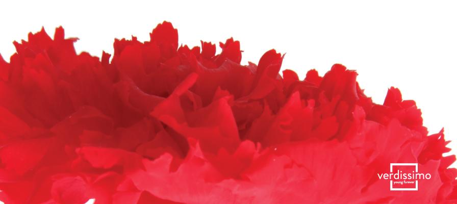 Dillo con i fiori! Il significato del garofano rosso - Verdissimo
