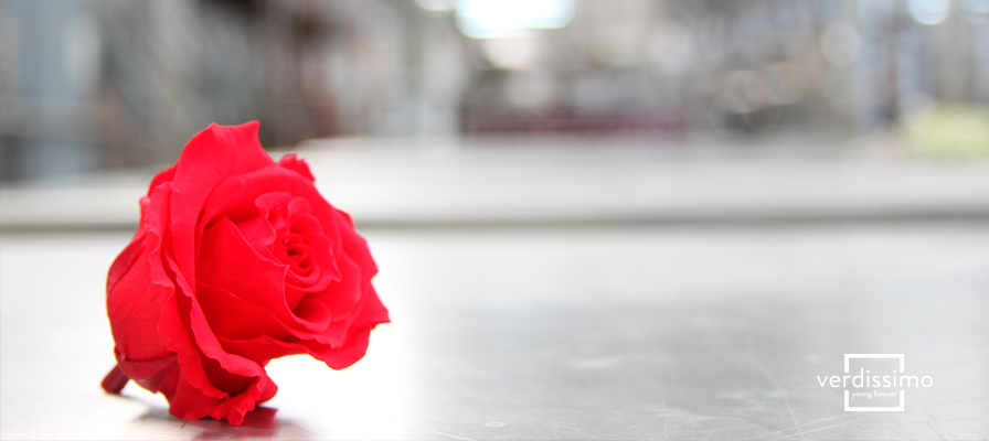 The Meaning of Red Roses - Verdissimo