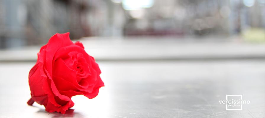 vrd_imagen_interna_Significado-de-las-Rosas-Rojas2