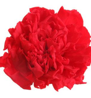 Carnation - Verdissimo