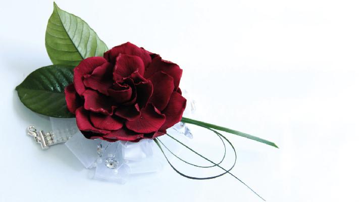 gardenia roja
