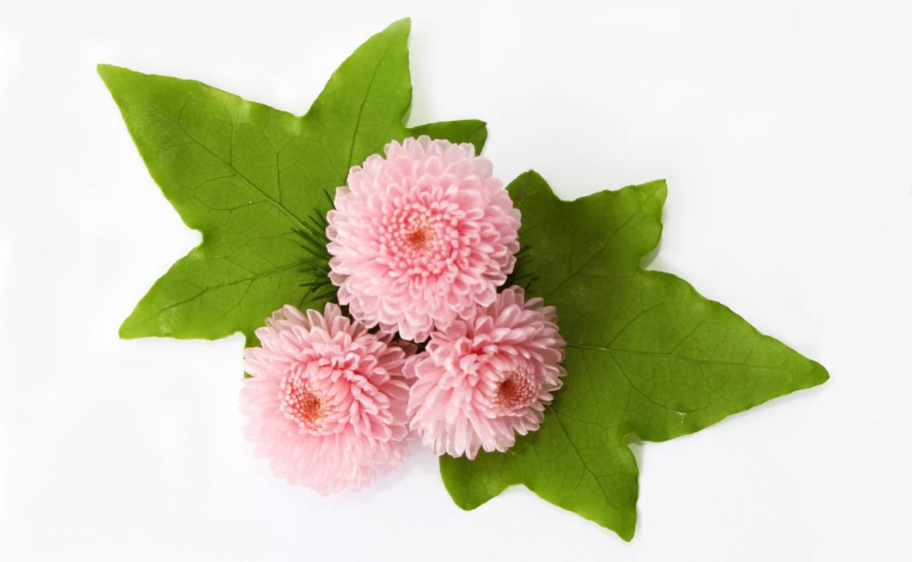 Crisantemo-verdissimo