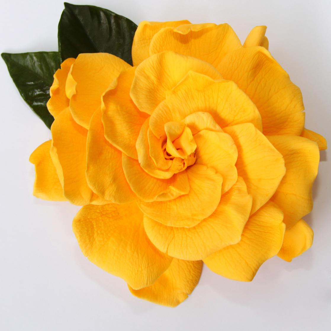 gardenia-verdissimo