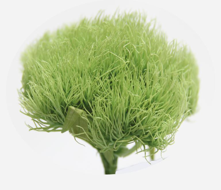 Green-ball-verdissimo