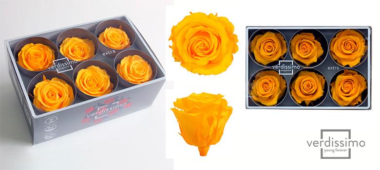 Yellow roses extra- Verdissimo