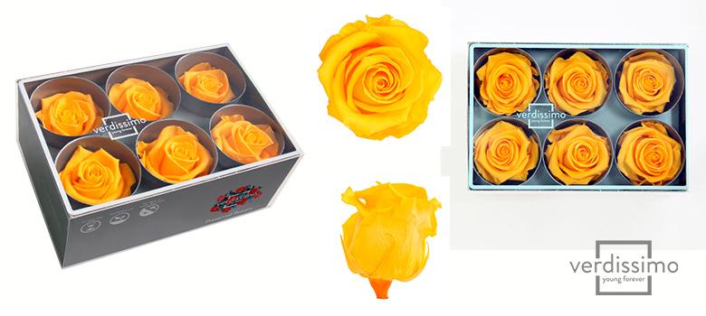 Yellow roses Standard - Verdissimo