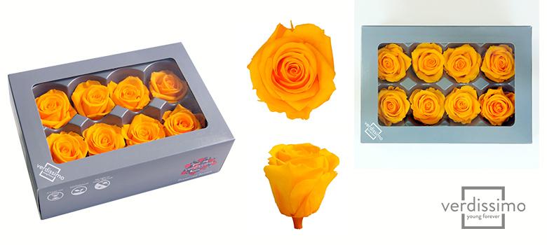 Yellow roses Medium - Verdissimo