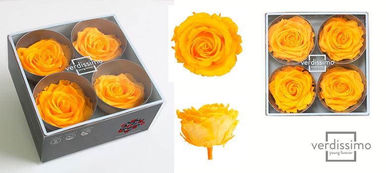 Yellow roses premium - Verdissimo