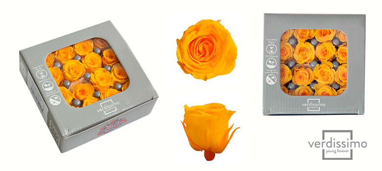 Yellow roses Princess - Verdissimo