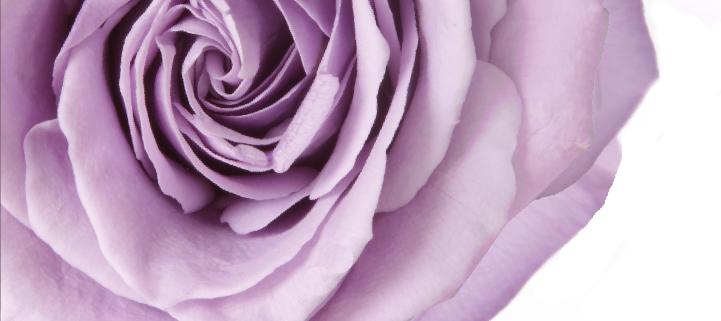rosa-premium-verdissimo