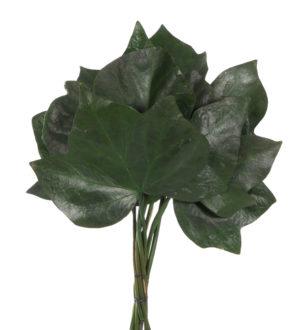 Ivy - Verdissimo