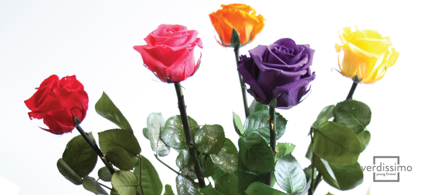 The meaning of roses according to their colour - Verdissimo