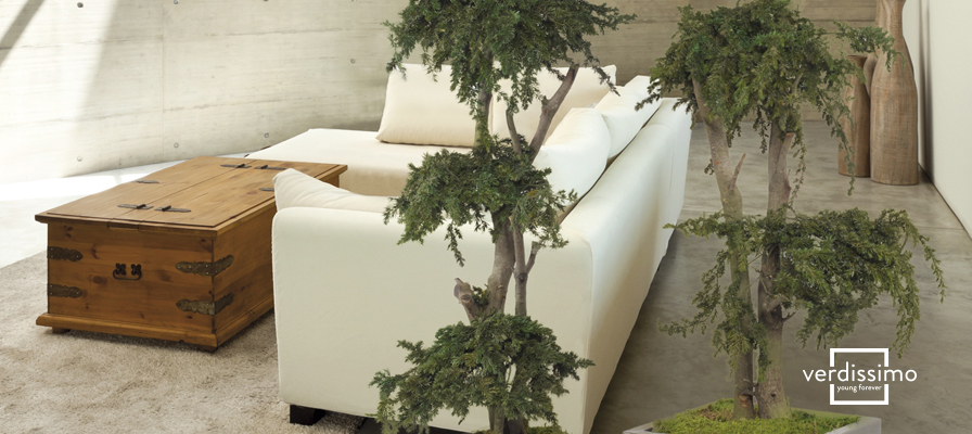 4-arboles-para-decorar-tu-patio-interior-verdissimo