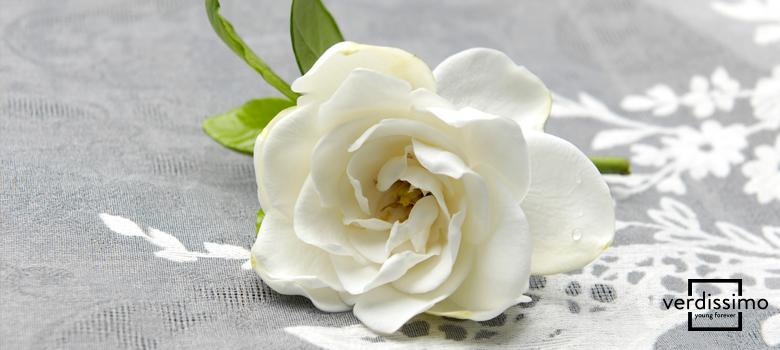 Nombres De Las Flores Cuales Son Sus Significados Verdissimo