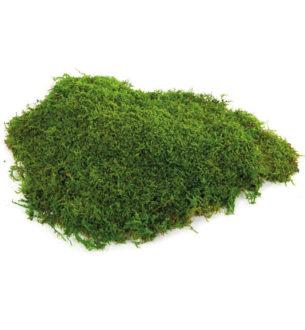 Flat moss - Verdissimo