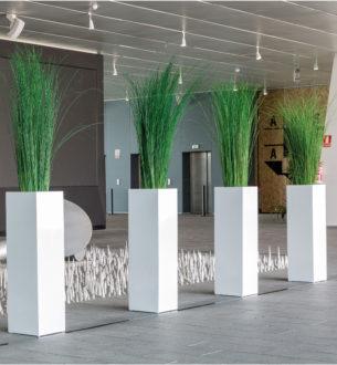 Plantas Ginerium - Verdissimo