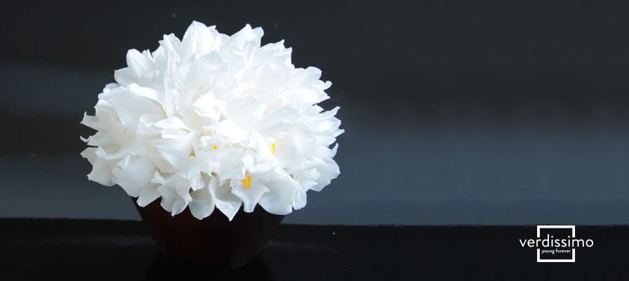 La-flor-preservada-del-mes-Orquidea-Cymbidium-interna-verdissimo
