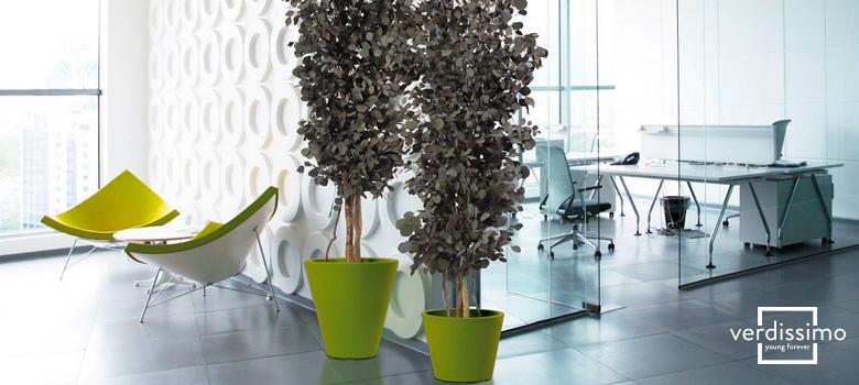 Los tipos de eucaliptos de Verdissimo y sus diferentes usos verdissimo