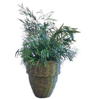 Plantas Nicoly - Verdissimo