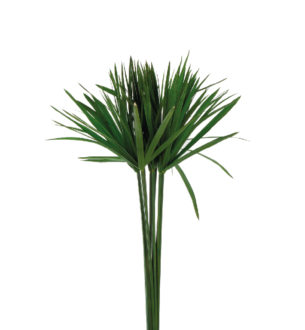 Papyrus - Verdissimo