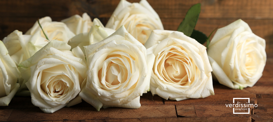 Roses blanches : quelle est leur signification? - Verdissimo