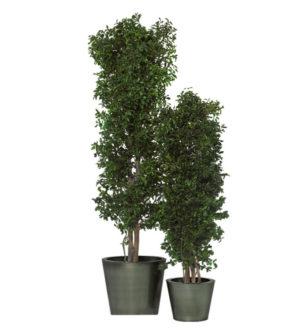 Slim Tenuifolium - Verdissimo