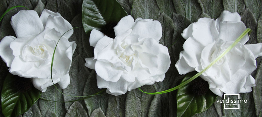 The Preserved Flower of the Month The Gardenia-verdissimo