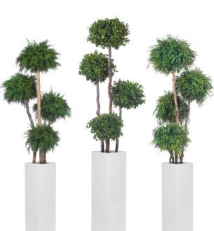 Topiary 4 Spheres - Verdissimo