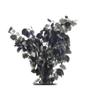 White Poplar - Verdissimo