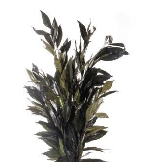 Cocolus - Verdissimo