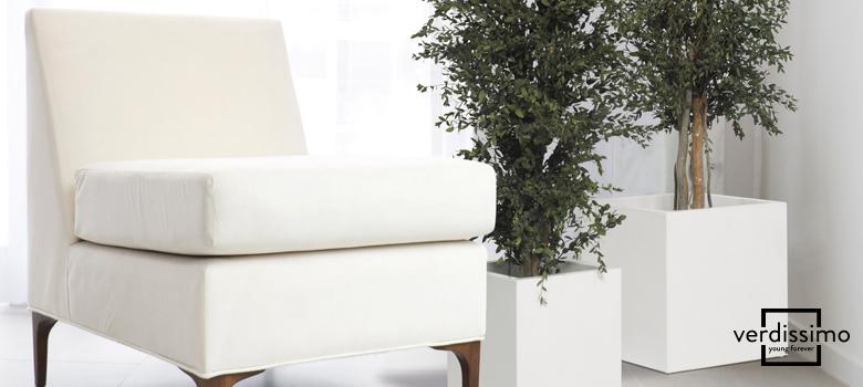 el-arbol-preservado-del-mes-eucalipto-nicoly-verdissimo