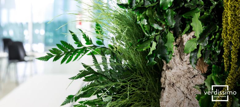 el-arbol-preservado-del-mes-hedera-crown-verdissimo