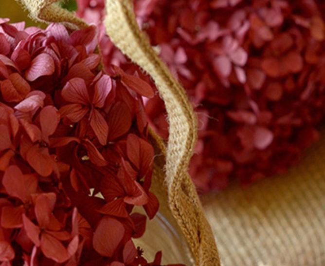 La signification des hortensias - Verdissimo