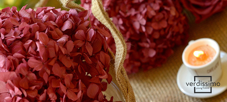 el significado de las hortensias - verdissimo