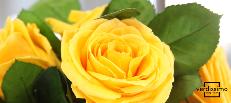el significado de las rosas amarillas - verdissimo