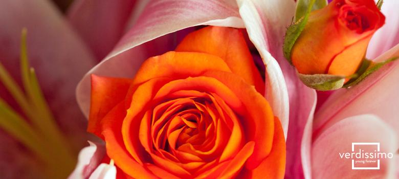 el-significado-de-las-rosas-naranjas-verdissimo